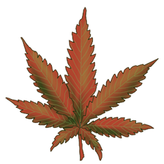 File:Cannabis Bubba Kush.png