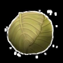 Huedcabbage