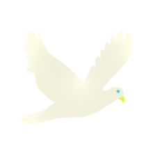 Pet dove
