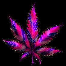 Cannabis polar lights