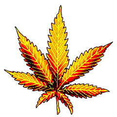 File:Cannabis golden shot.png