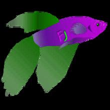 Pet fj fish