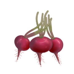 File:Radishes.png