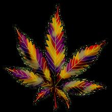 Cannabis holland hope