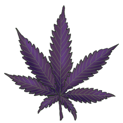 File:Purple danx.png