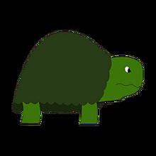 Terry the tortoise pet