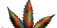 Cannabis: Amsterdam Pride