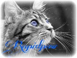 Rapidpaw