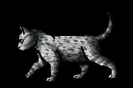 Pantherkit.kit