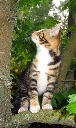 Kitten-tree-looking-up