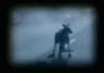 Arquivo:Kangaroo.png