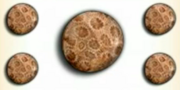 Petrified coral