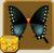Spicebush Swallowtail§Headericon