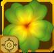 Forester Set§AF2 100%