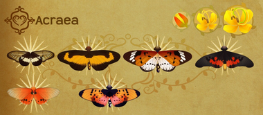 Acraea Set§Flutterpedia
