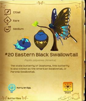 Eastern Black Swallowtail§Flutterpedia