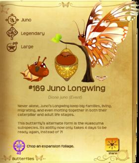 Juno Longwing§Flutterpedia UpgradedAlt