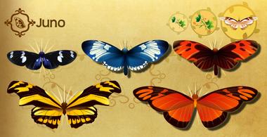 Juno Set§Flutterpedia