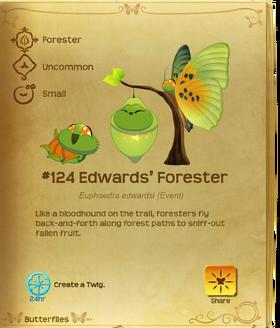 Edwards' Forester§Flutterpedia