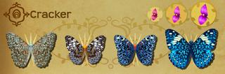 Cracker Set§Flutterpedia