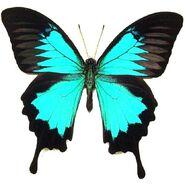 41 Sea Green Swallowtail