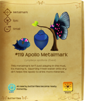 Apollo Metalmark§Flutterpedia
