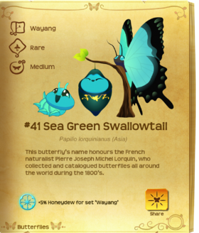 Sea Green Swallowtail§Flutterpedia