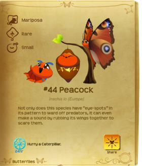 Peacock§Flutterpedia