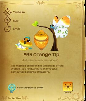 Orange Tip§Flutterpedia