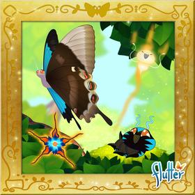 Ulysses Swallowtail§Facebook