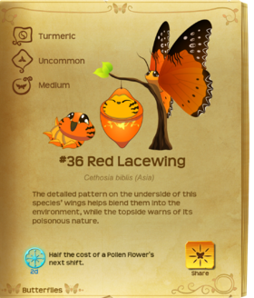 Red Lacewing§Flutterpedia