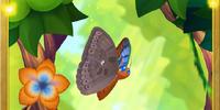 Tentyris Forester