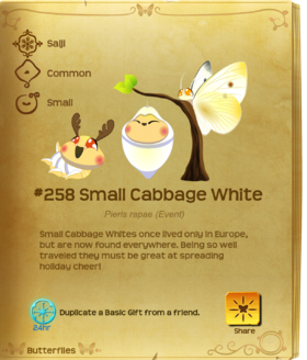 Small Cabbage White§Flutterpedia