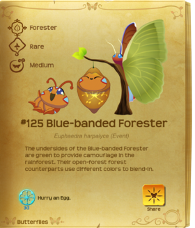 Blue-banded Forester§Flutterpedia