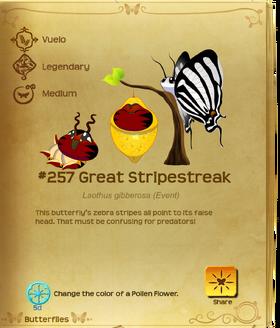 Great Stripestreak§Flutterpedia