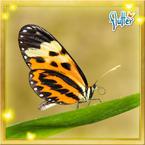 Flutterfact20150430NumataLongwing