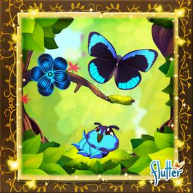 Midnight Blue Butterfly§Facebook