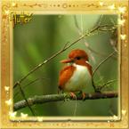 Flutterfact20150916Kingfishers