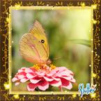 Flutterfact20160319CaliforniaDogface