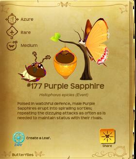 Purple Sapphire§Flutterpedia