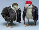 File:ThHot20Chicks.png