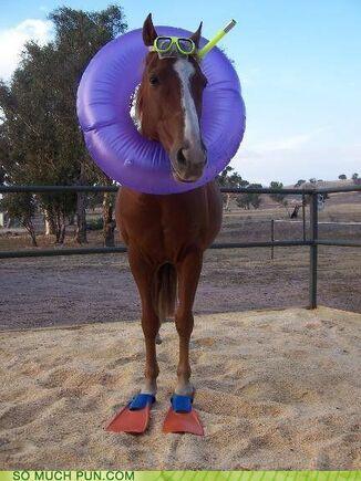 Funny-puns-sea-horse