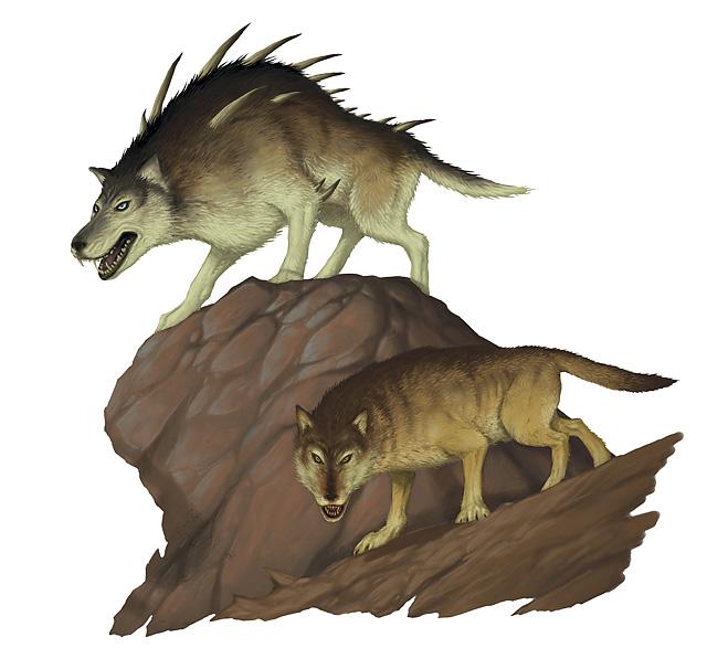 dire wolf forgotten realms wiki fandom powered by wikia