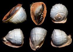 Black helmet shells1