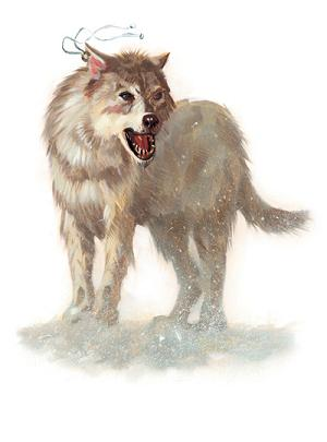 File:Winter Wolf.JPG