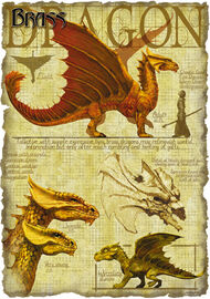 Brass dragon anatomy - Richard Sardinha