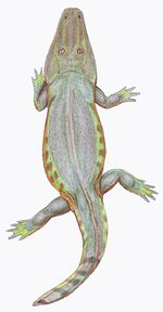 Tryphosuchus1DB