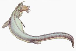 Mosasaurus 21copy