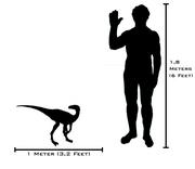 Human-eoraptor size comparison(v2)