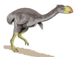 Dromornis BW